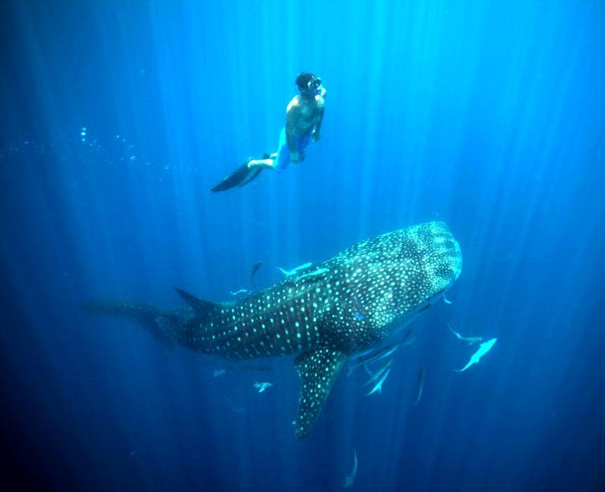 Safari Baleine