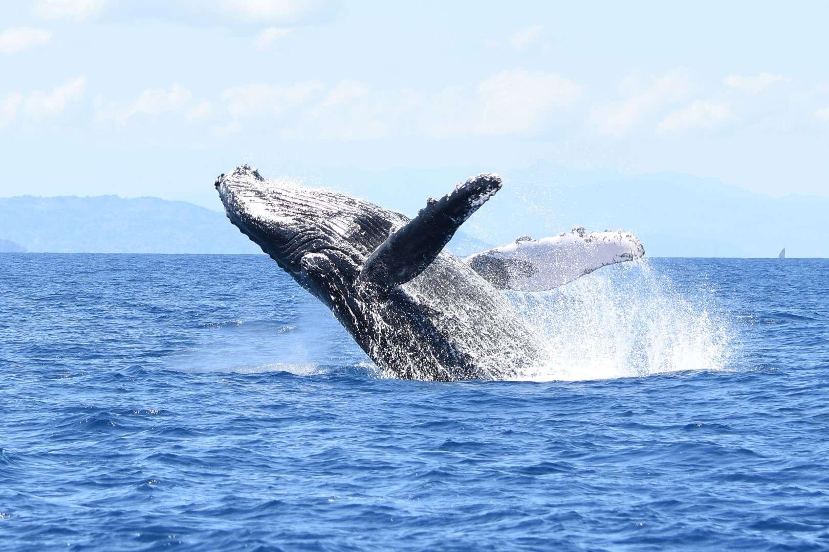 Week-end de la Baleine