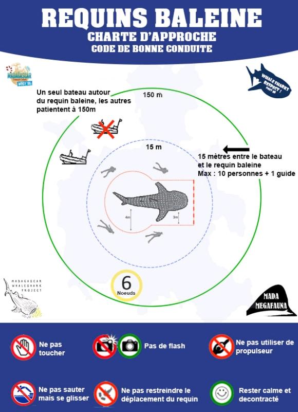 Les requins baleines