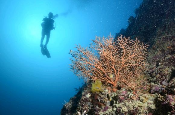 Diving Cattitude